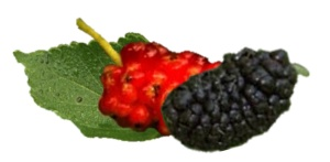Mulberries nutritional information