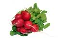 Radish nutritional information