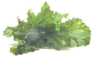 rapini nutritional information